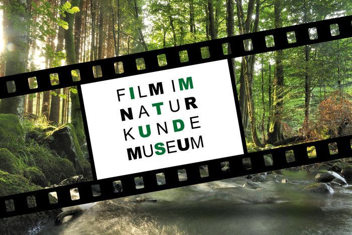 Film im Naturkundemuseum