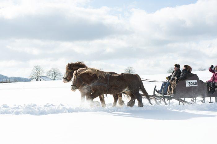 Pferde als Freizeitbegleiter – Schlittenfahrt